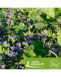 OPTIMA GreenLife Honigpflanzen für Brachen, einjährig