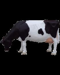 fressende Friesen-Kuh aus Kunststoff, lebensgroß
