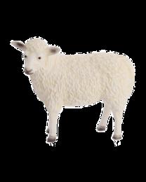 Schaf aus Kunststoff, lebensgroß